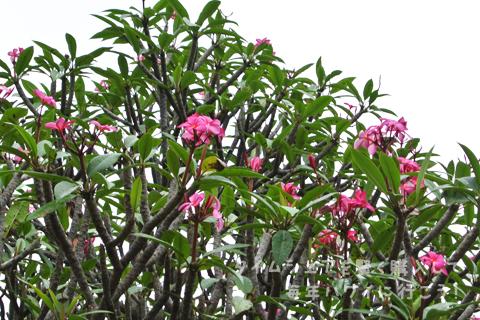 2月のココ・クレーター植物園