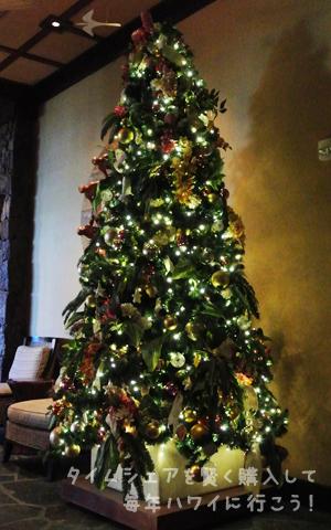 アウラニ・クリスマスツリー