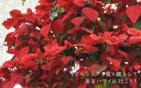 カハラモール・クリスマスツリー